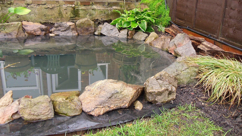Top Myths About Backyard Ponds Leaf Lette