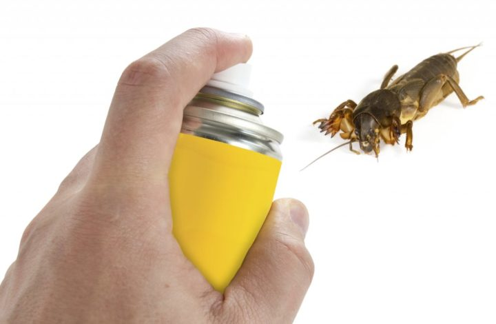 Getting Rid Of Pests In Your Home Or Office Can Be Fast And Simple