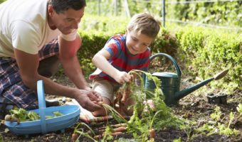 Growing Your Own Fruit And Veg