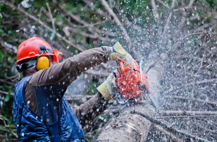 5 Essential Tips To Hire The Best Tree Surgeon